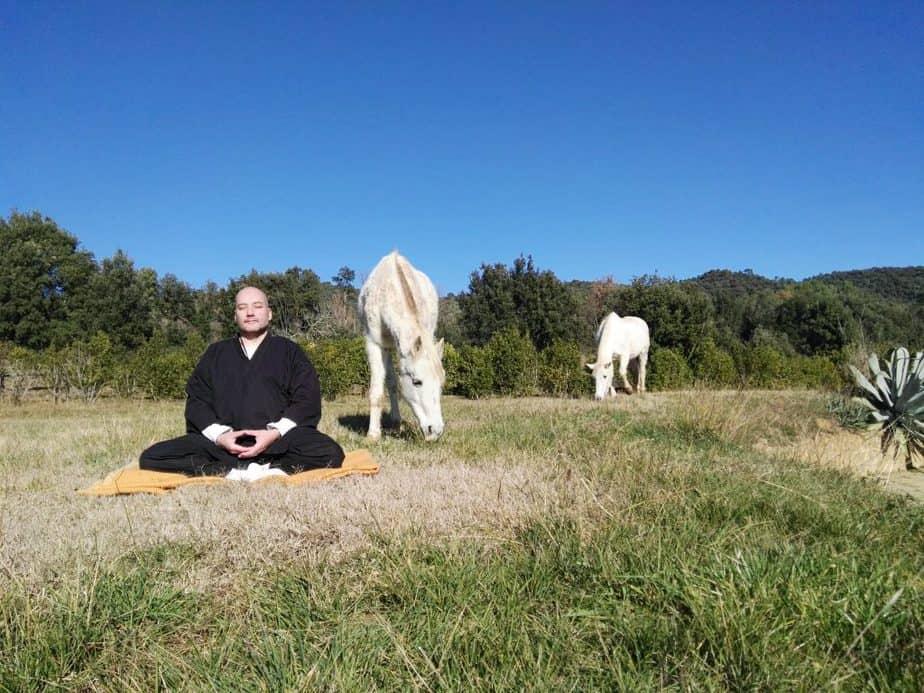 actividades de meditación con animales