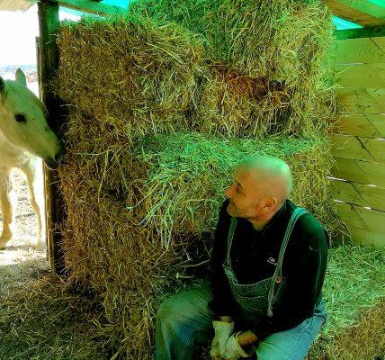los animales curan