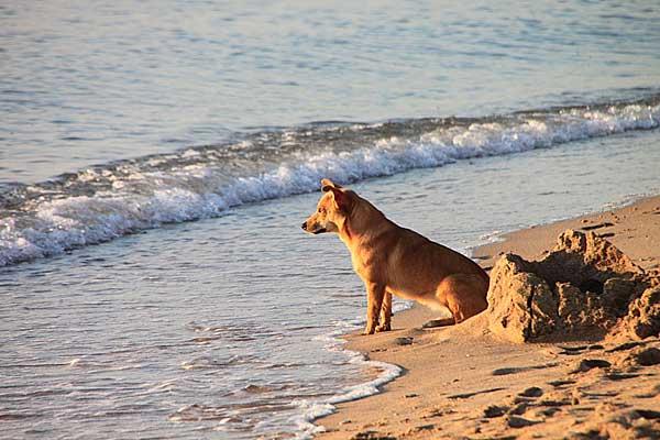 perro en la playa, cuidando la madre naturaleza