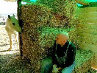 compromiso con los animales